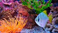 découvrez lors d'un bapteme de plongée les merveilles du monde sous marin