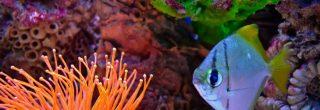 découvrez lors d'un baptême de plongée les merveilles du monde sous marin