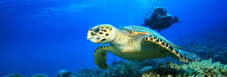 Découvrez la plongée lors d'un baptèmes en Guadeloupe avec les tortues sous marines