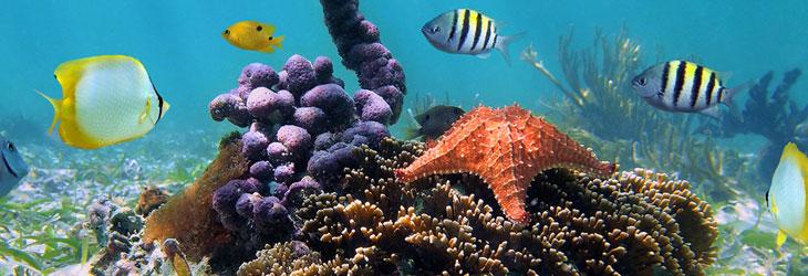 voir les plus beaux poissons des antilles dans la réserve cousteau à bouillante